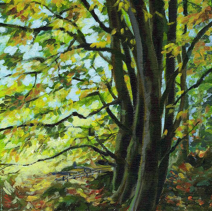 Autumn beeches