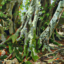 Hornbeam trunk, acrylic painting by by Kate Chitham