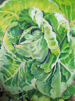 Cabbage 'Spring Hero'