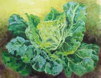 Garden cabbage