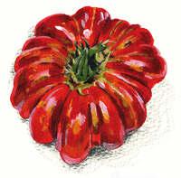 Beefsteak tomato painting