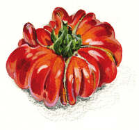 Beefsteak tomato acrylic on board